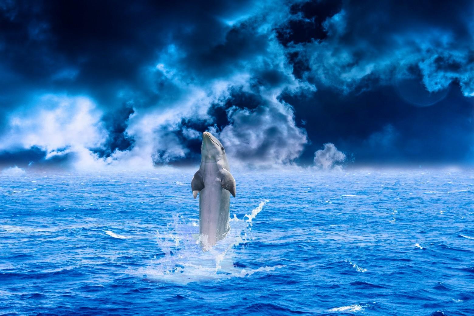 Fond d cran dauphin fond bleu mer oc an images gratuites for Images gratuites fond ecran mer
