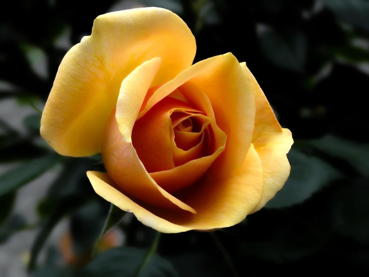 Super belles images fleurs gratuites libres de droits | images gratuites  TR68