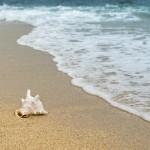 images gratuites : plage, coquillage