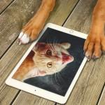 animaux images drôles gratuites