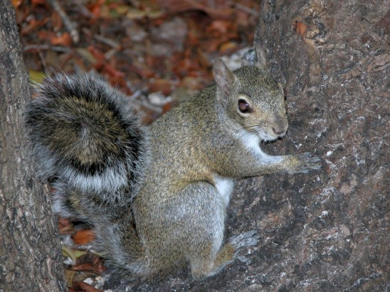 écureuil sur un arbre