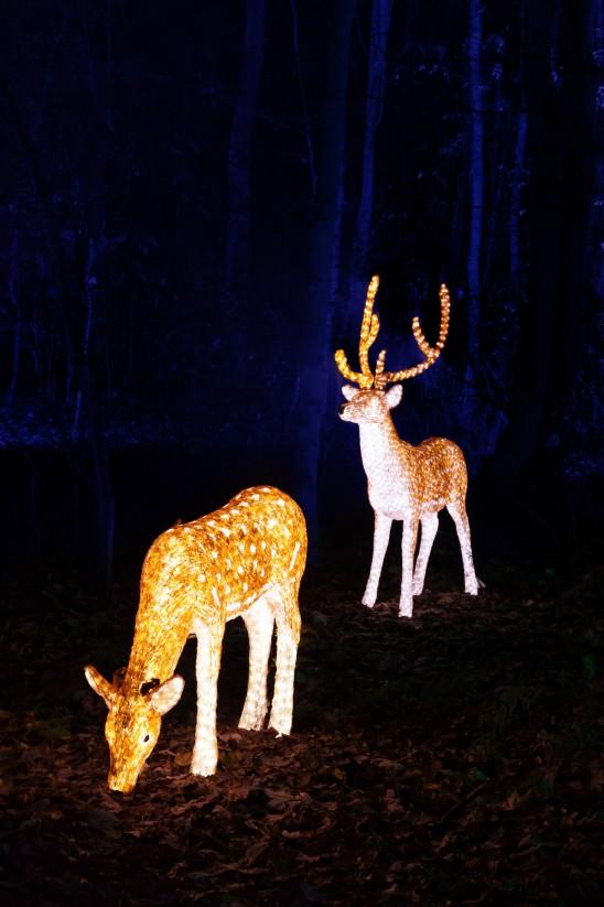 cerfs illuminés décoration noel