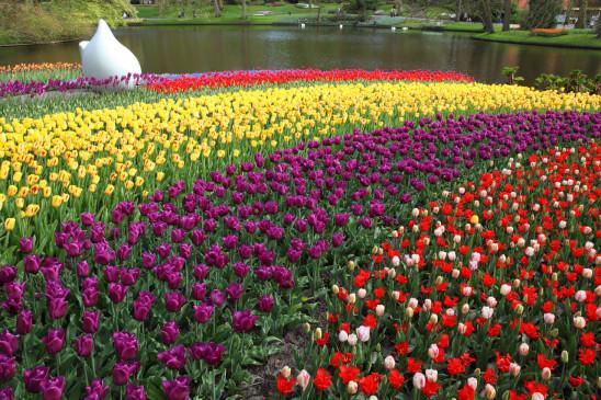 champs de fleurs tulipes plusieurs couleurs