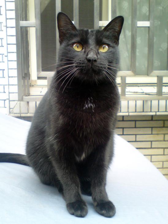 chat noir portrait