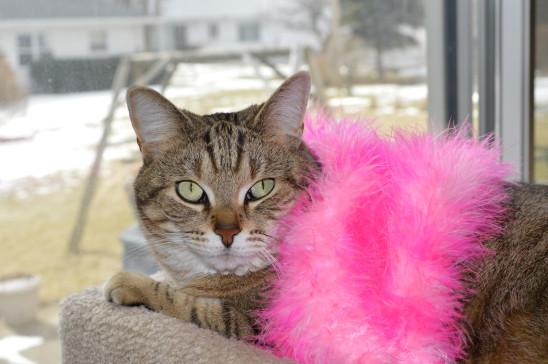 chat portant une écharpe rose