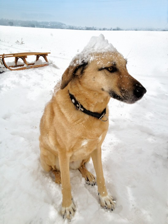 chien hiver neige froid