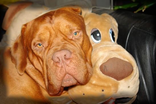 chien marron et peluche