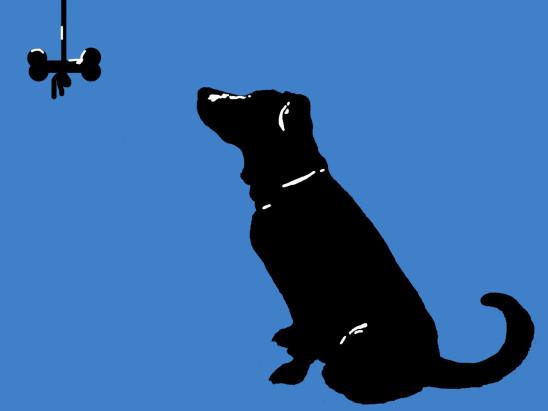 chien os illustration