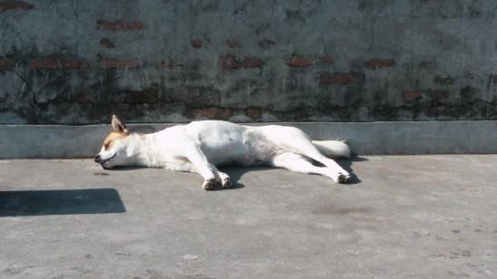 chien seul solitude