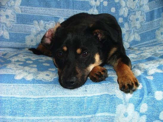 chien sur un canapé