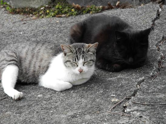 couple de chat seul abandon