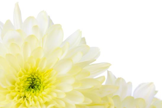fleur jaunes image de fond