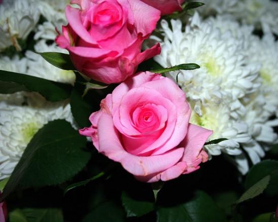 fleurs bouquets de rose