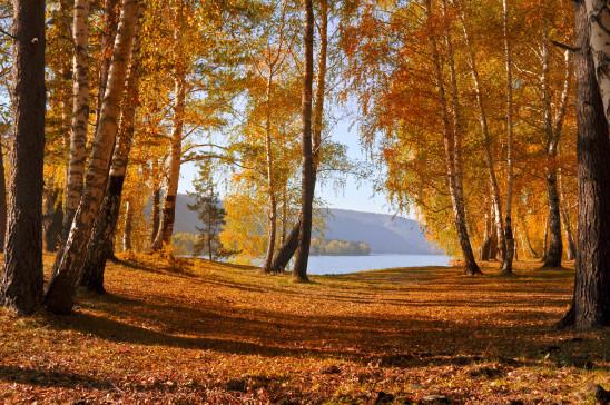 forêt saison automne feuille morte