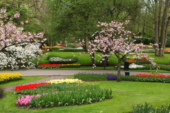 parc fleuri  jardin de fleur