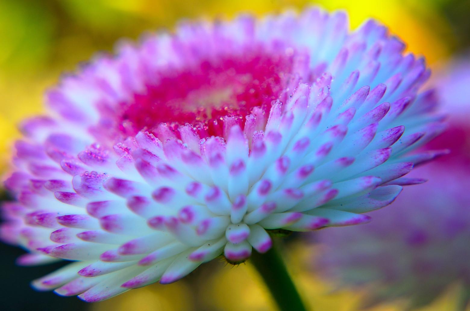 jolie fleur   images gratuites et libres de droits