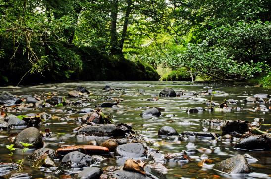 paysage étang rivière eau forêt arbre