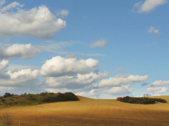 paysage champ ciel bleu