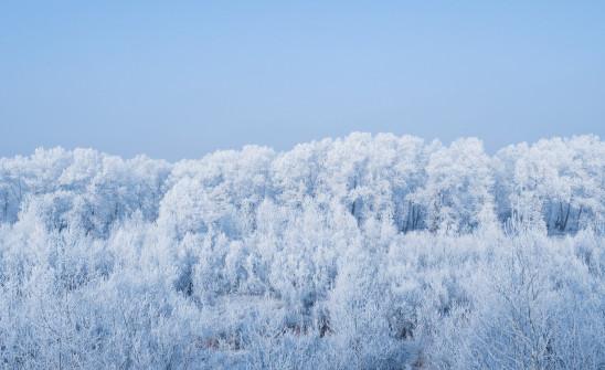 paysage de neige sapin