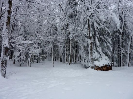 paysage hiber sapin enneigé