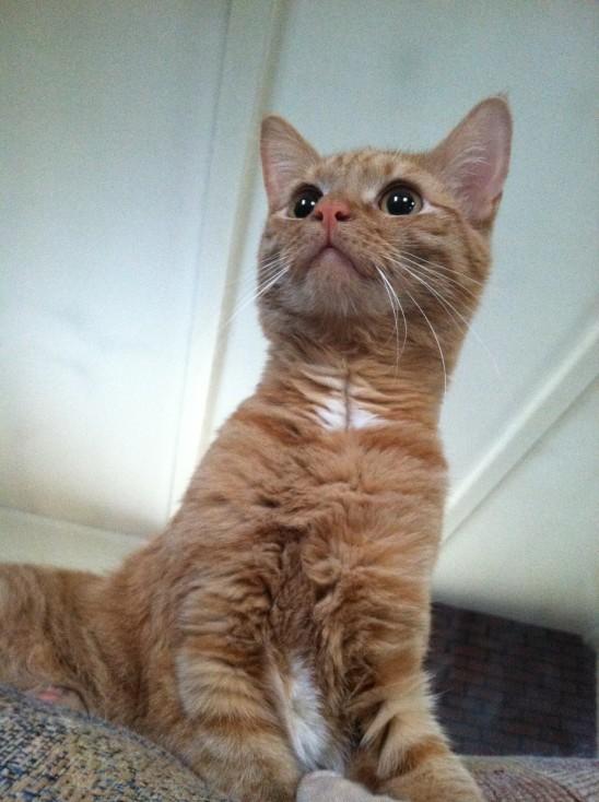 petit chat chaton mignon