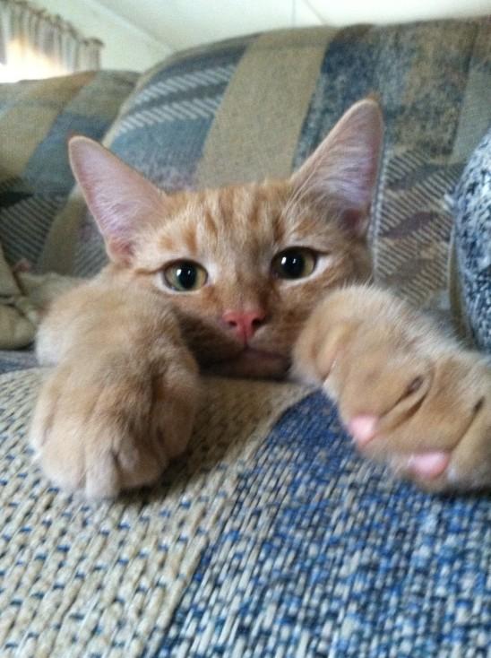 petit chat qui s' ennuie