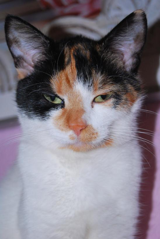 petit chat tacheté