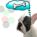 chien bouledogue os