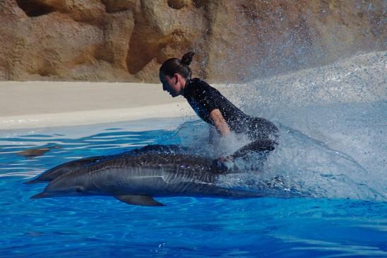dauphin et femme