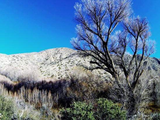 végétation pauvre du désert