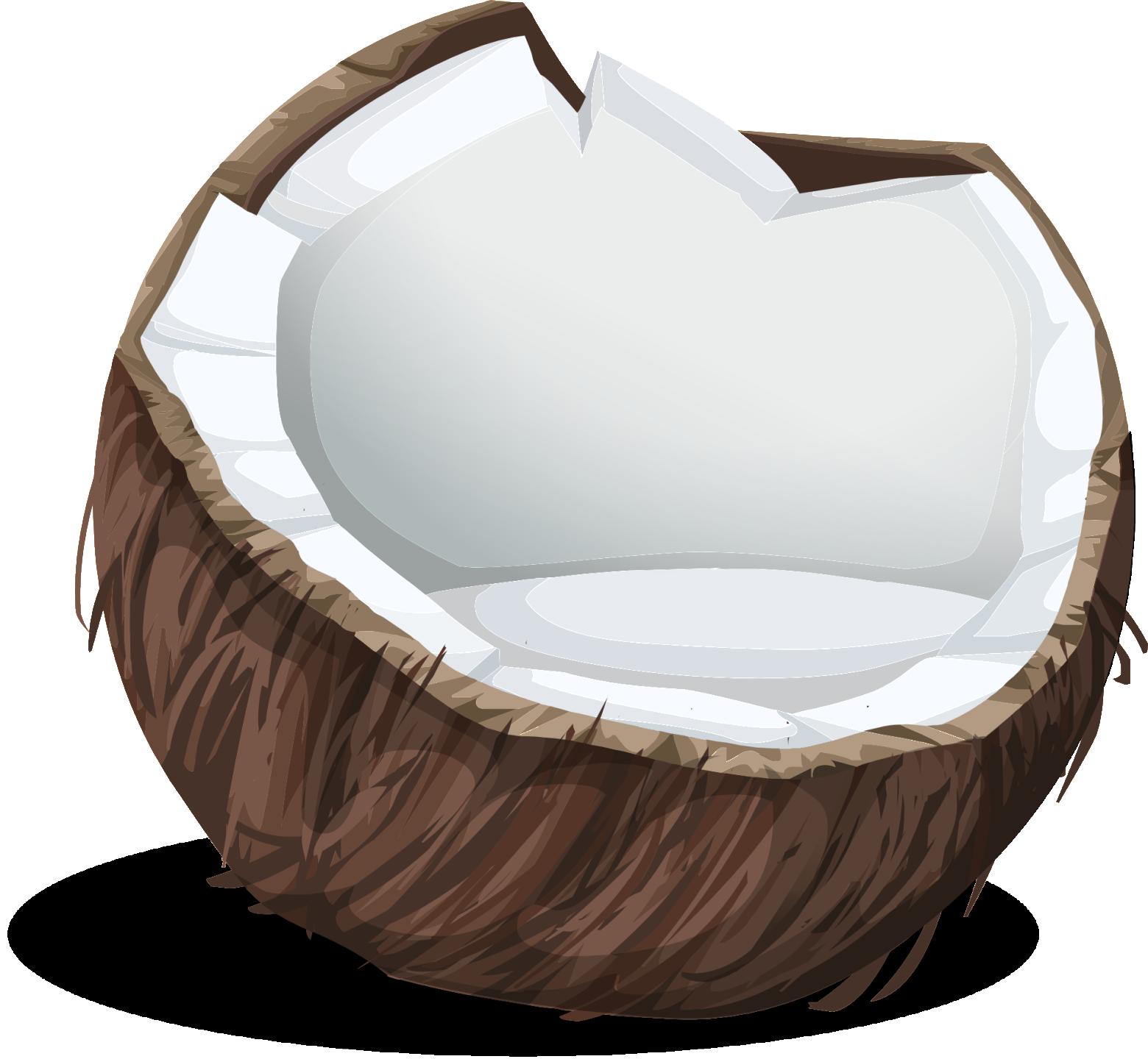 Noix de coco dessin illustration isol sur fond blanc - Dessin noix de coco ...