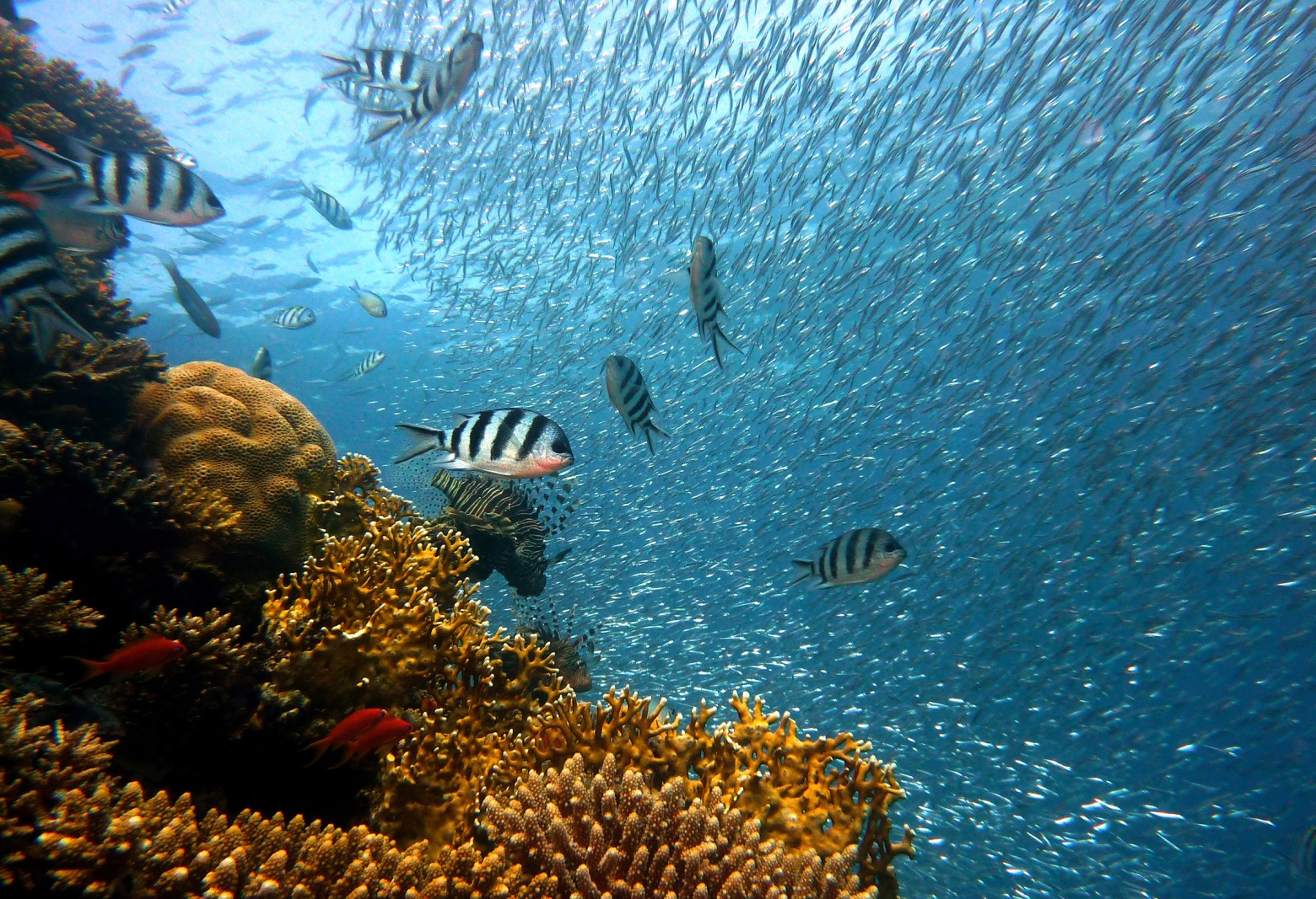 poissons exotiques d eau douce images photos gratuites images gratuites et libres de droits