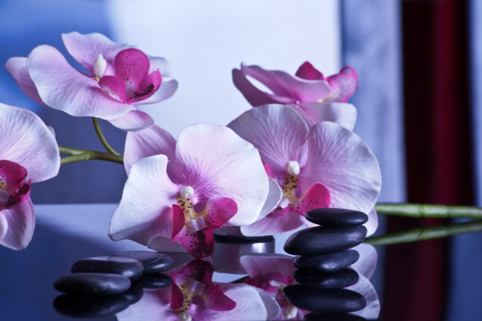Fond zen leur orchid es galet images gratuites et libres for Photo ecran zen