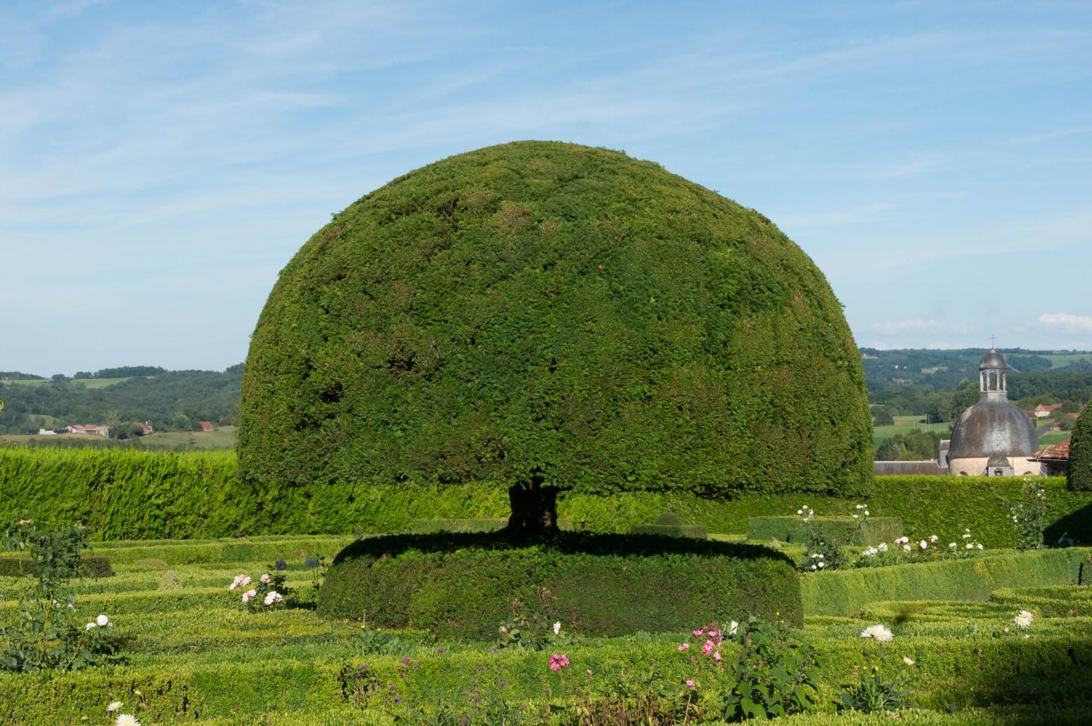 Topiaire jardin arbre vert images gratuites et libres de - Arbres de jardin ...