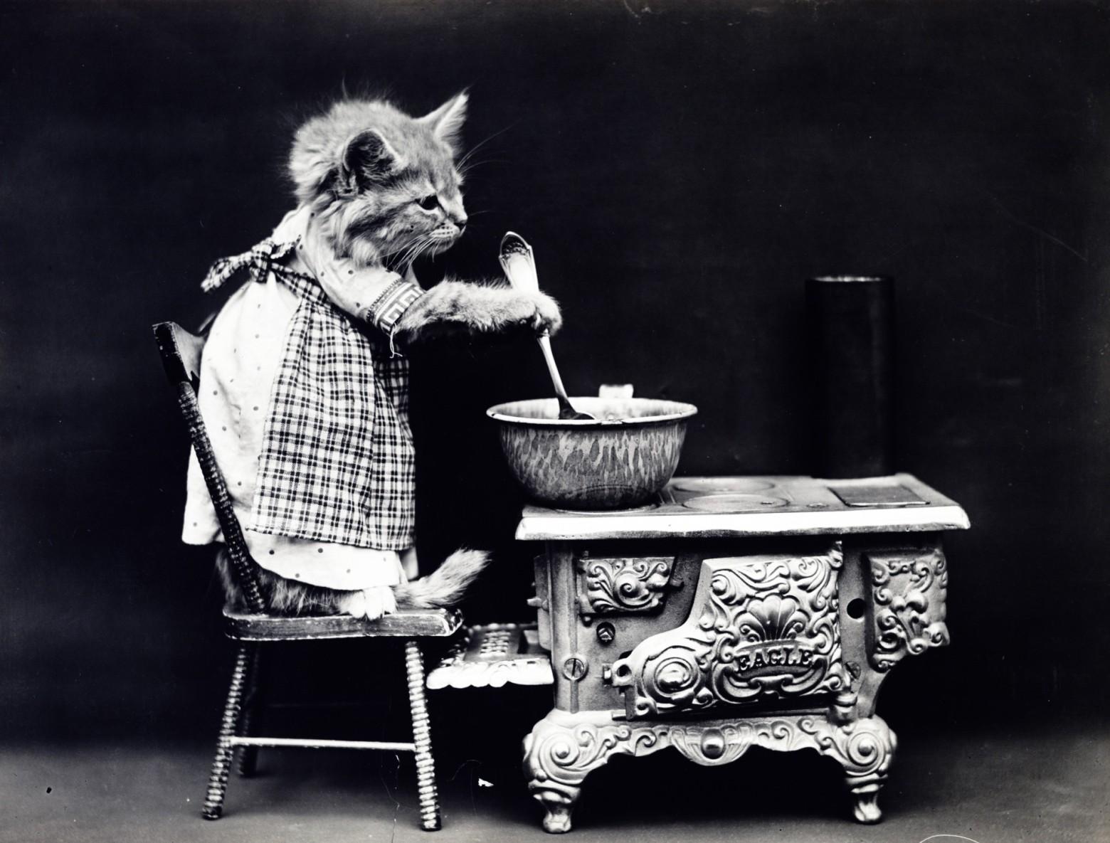 Préférence images photos drôles vintage cuisinier images photos gratuites  XR64