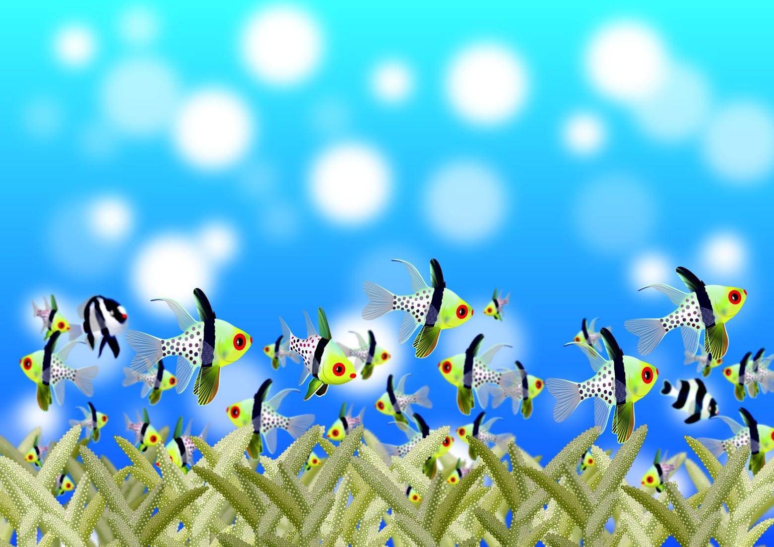 fond d 233 cran aquarium poissons exotiques images gratuites images gratuites et libres de droits