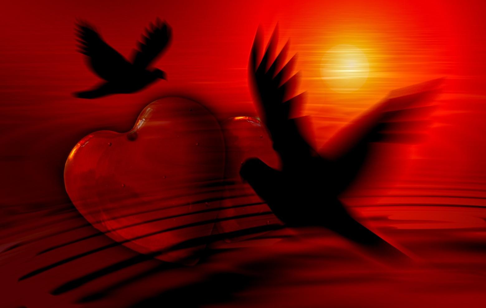 coeur-rouge-silhouette-oiseau-amour-love-images-photos-gratuites-1560x988