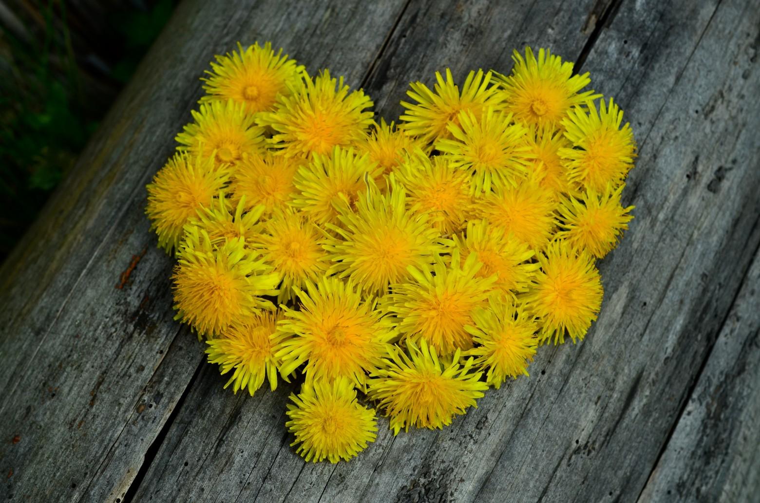 Fleurs jaunes pissenlits formant un coeur images photos - Images coeur gratuites ...