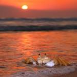 paysage plage crabe coucher de soleil sunset fond d' écran images gratuites