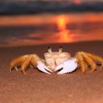 plage crabe coucher de soleil sunset fond d' écran images gratuites