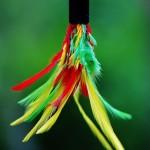 plume plumeau coloré images photos gratuites