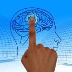 santé médical cerveau crane main doigt