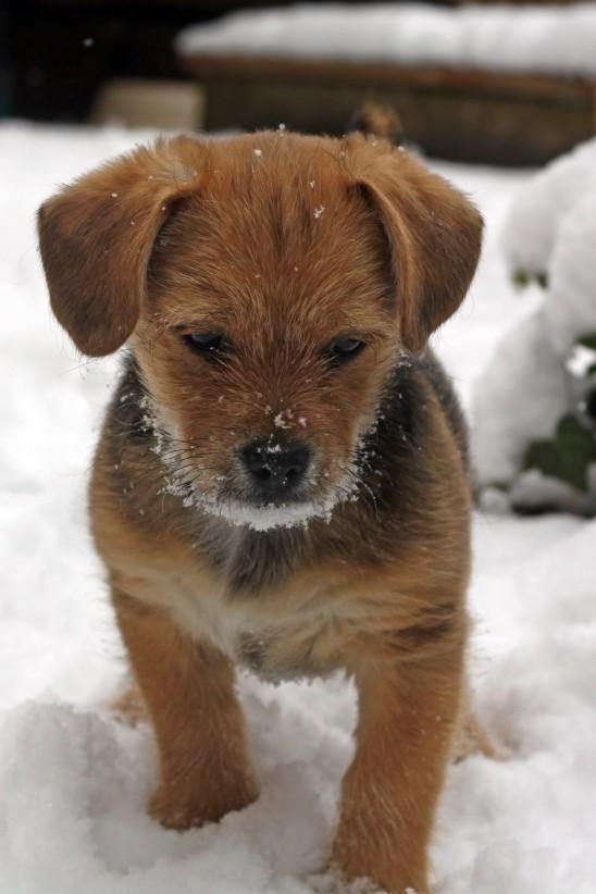 petit chien chiot mignon images photos gratuites
