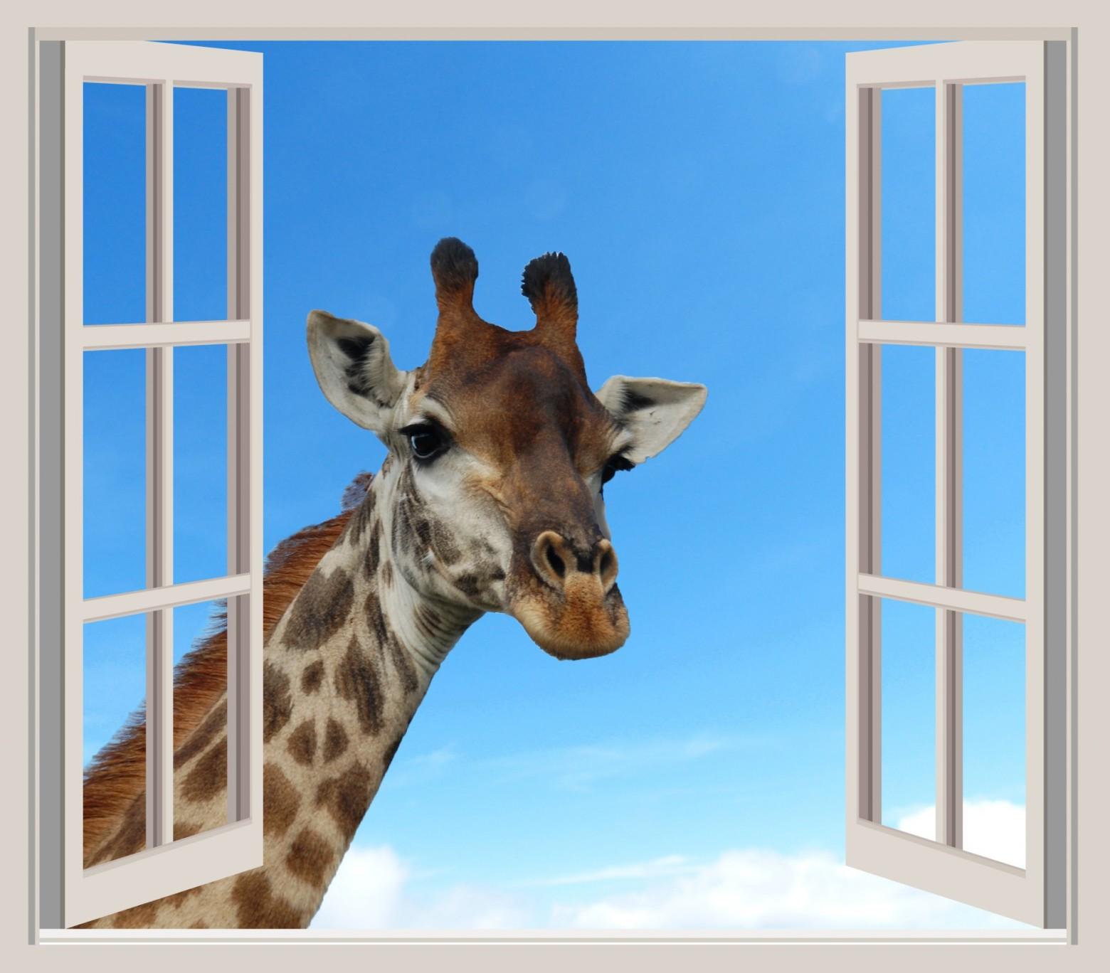 Portrait girafe fen tre ouverte images photos gratuites for Par la fenetre ouverte bonjour