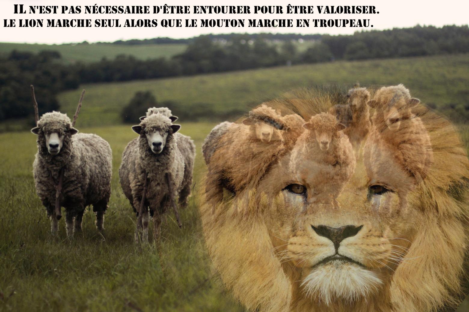 Fort comme un lion images gratuites et libres de droits - Photos de moutons gratuites ...