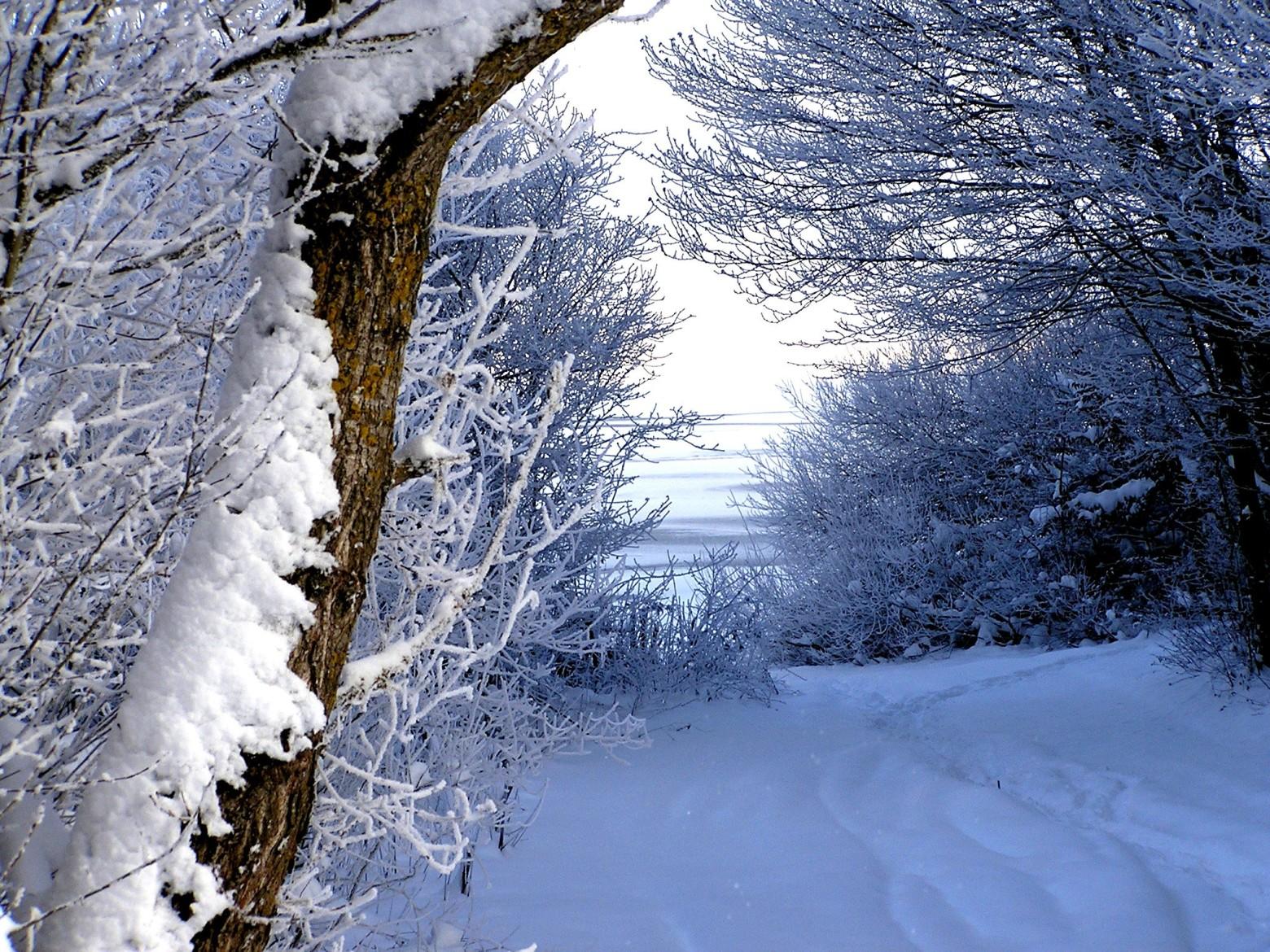 Photos gratuites de paysage l hiver la neige for t - Photos de neige gratuites ...