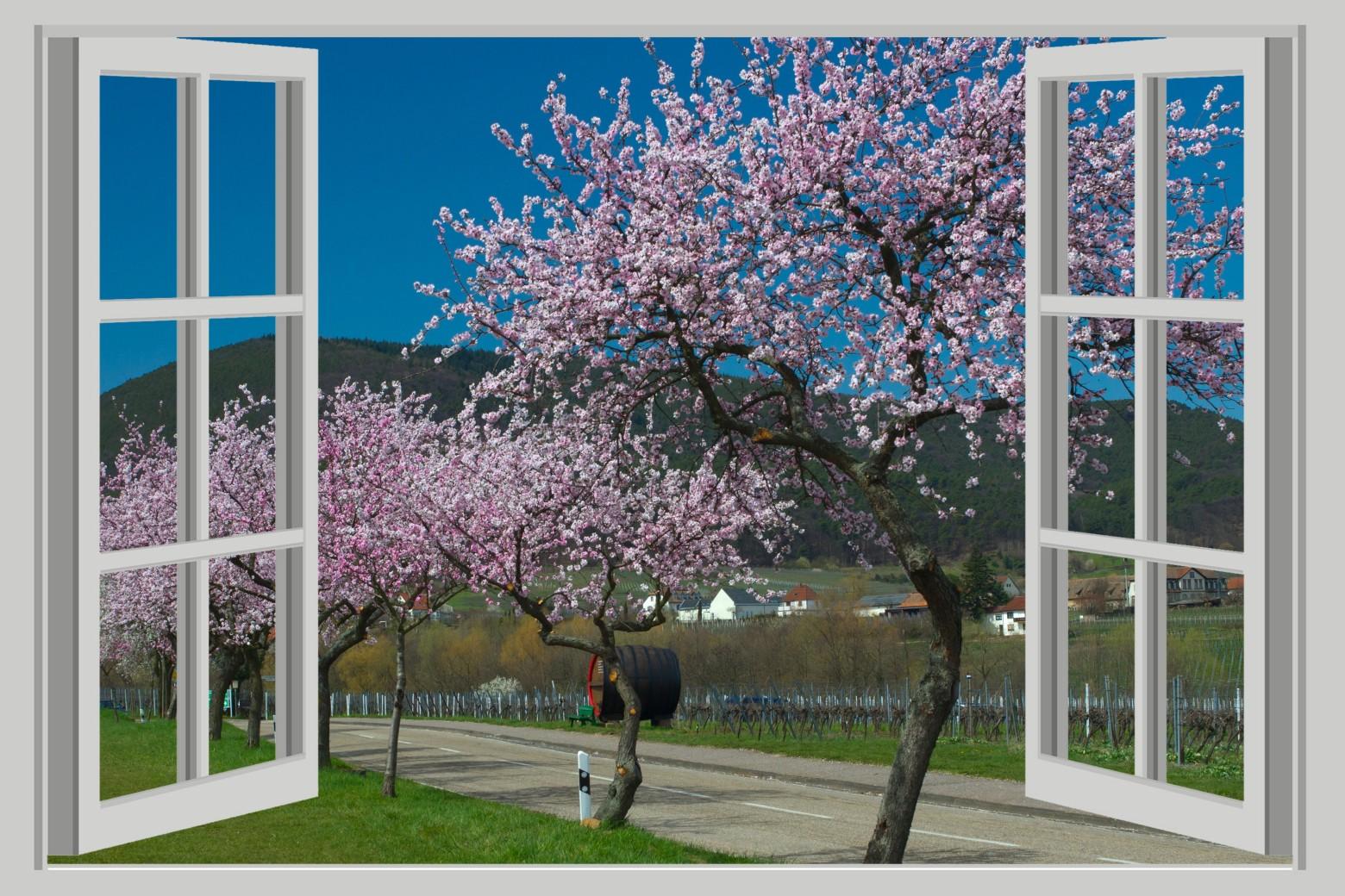 fen tre ouverte sur un paysage fleuri images gratuites et libres de droits. Black Bedroom Furniture Sets. Home Design Ideas