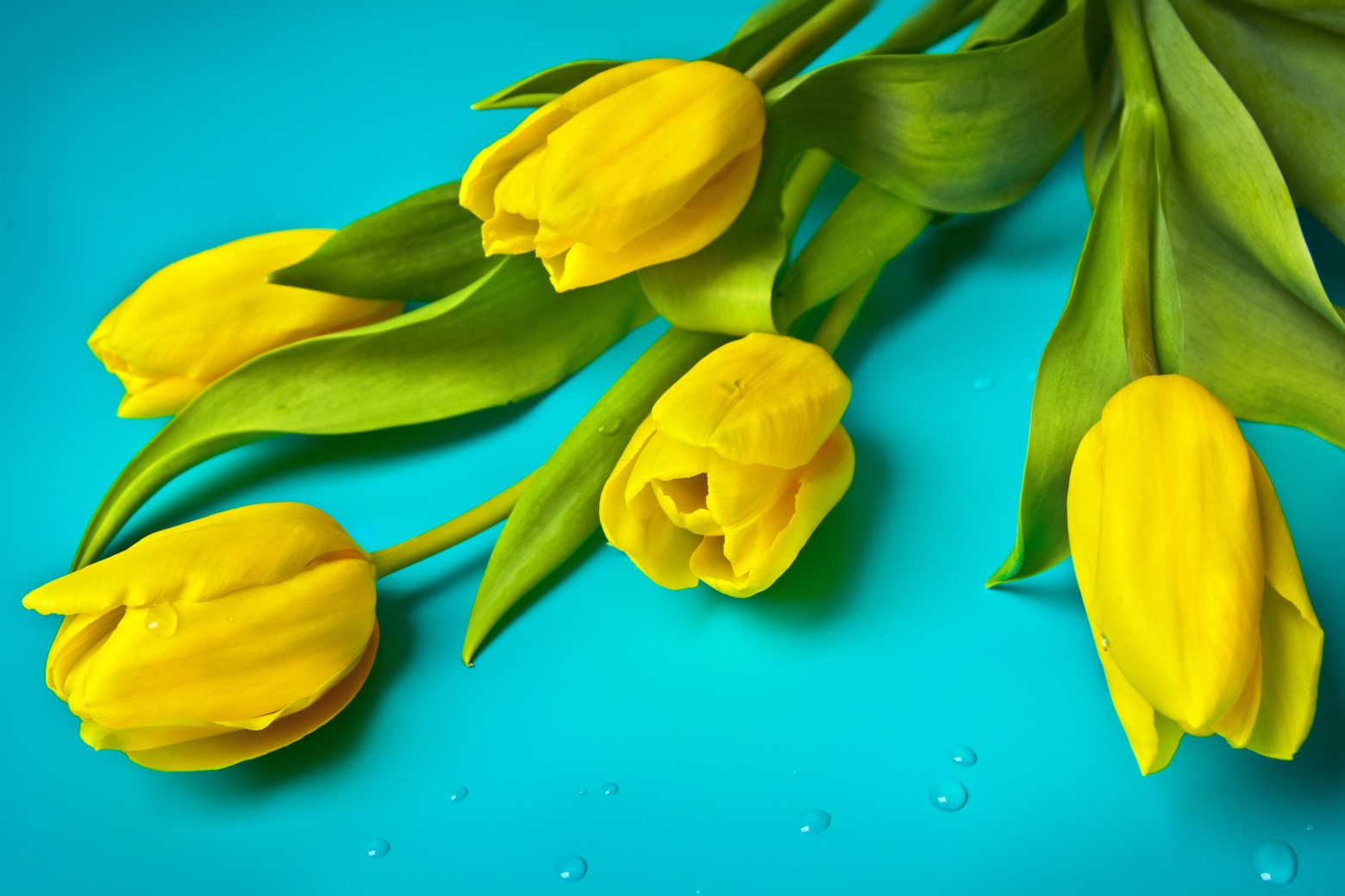 hd wallpaper yellow