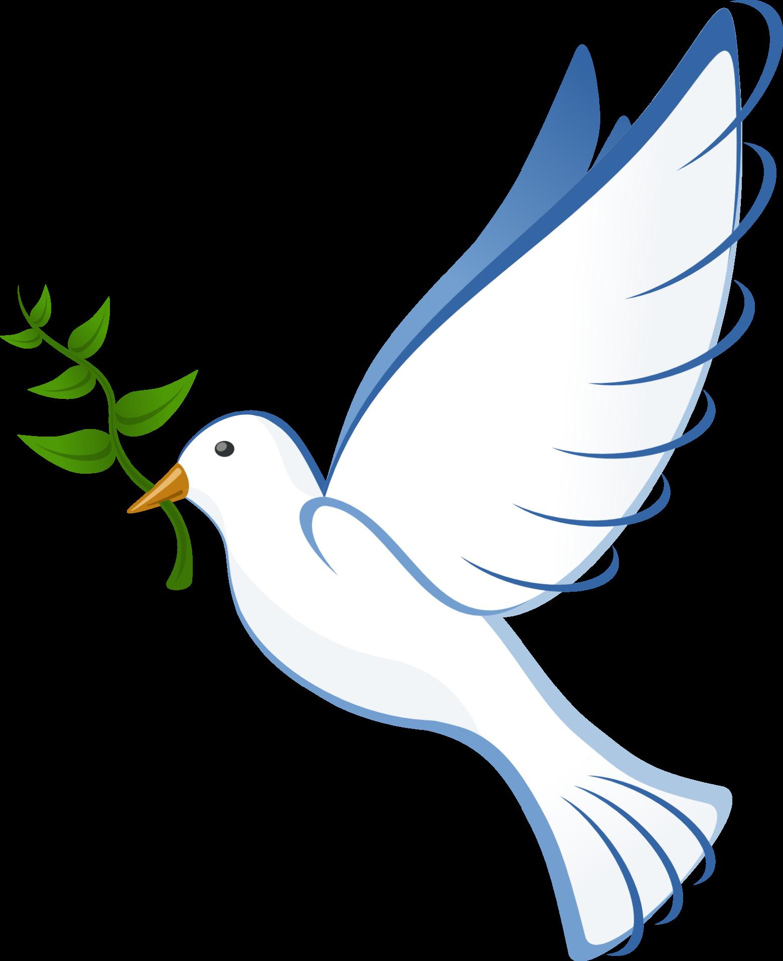 Fabuleux message de paix la colombe blanche images gratuites | images  BY69