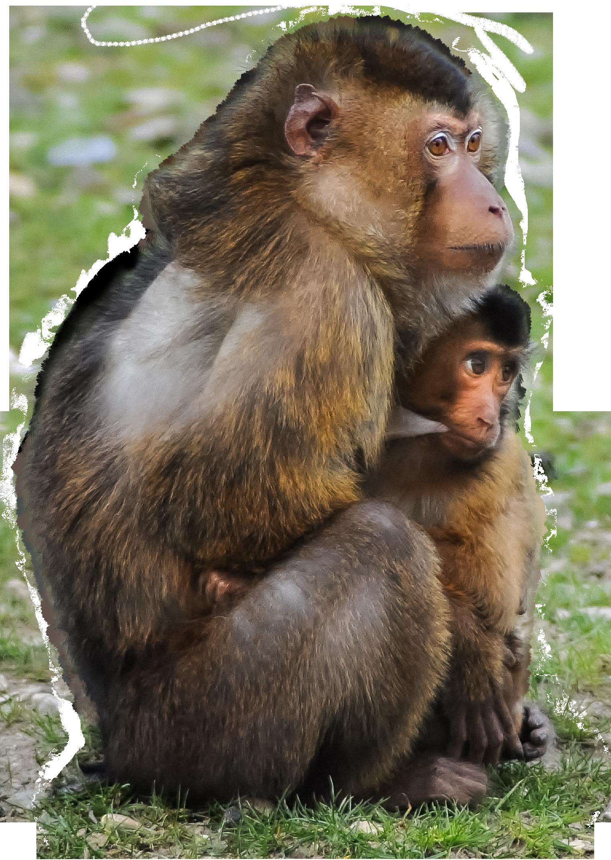 Top singe détouré sur fond blanc images photos gratuites | images  FY79